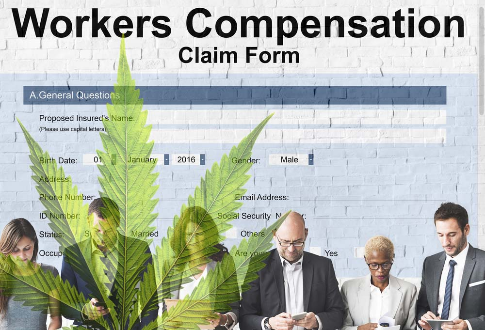 Can an Employer Deny a Workers' Comp Claim After Testing for Cannabis